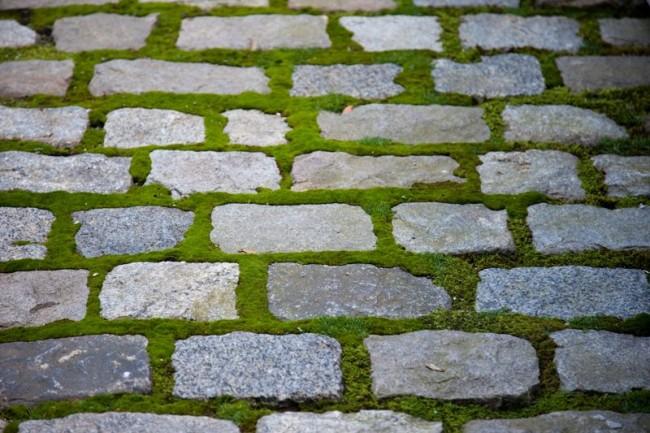Мох между камнями брусчатки