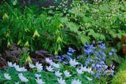 Фото 13 Анемоны, посадка и уход (50 фото): как вырастить хрупкий цветок-неженку