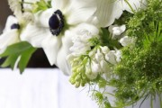 Фото 23 Анемоны, посадка и уход (50 фото): как вырастить хрупкий цветок-неженку