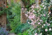 Фото 21 Анемоны, посадка и уход (50 фото): как вырастить хрупкий цветок-неженку