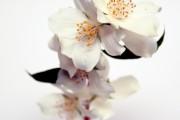 Фото 21 Чубушник (кустарник жасмин) – 55 фото: сорта и виды, посадка и дальнейший уход