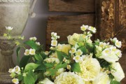 Фото 15 Чубушник (кустарник жасмин) – 55 фото: сорта и виды, посадка и дальнейший уход