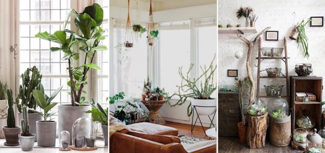 Флорариумы - это живое чудо за стеклом