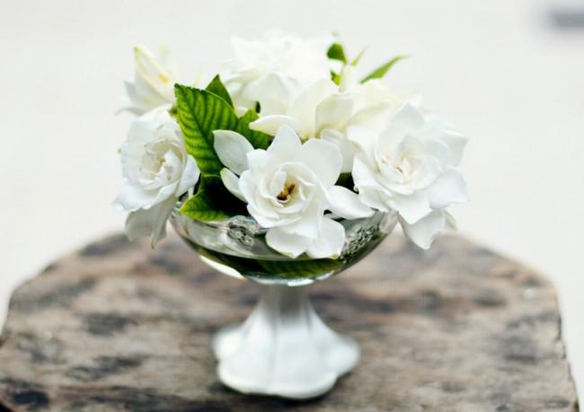 """Гардения жасминовидная - очень декоративный цветок, заслуженное второе название которого """"gardenia Augusta"""" (царственная)"""