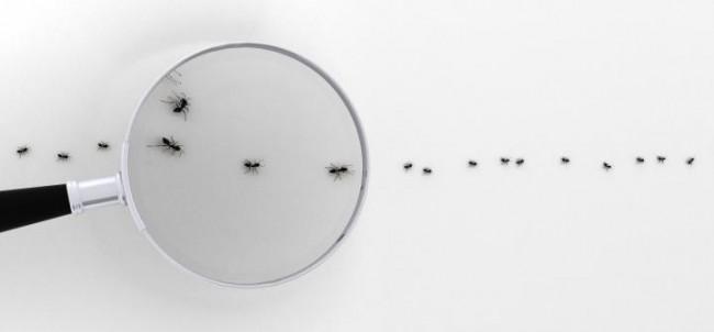 Как избавиться от муравьев в частном доме. В этой статье мы подробно проясним вопросы выбора способов борьбы с муравьями и их практическое применение