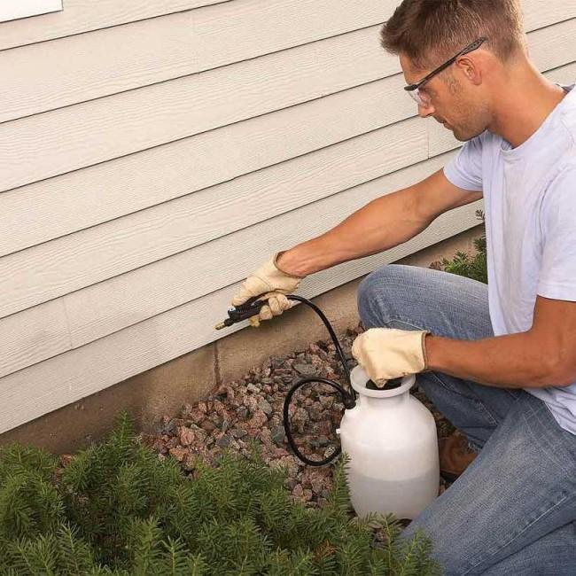 Как избавиться от муравьев в частном доме. Аэрозольную дезинсекцию можно провести самому, разрешенными для этого препаратами