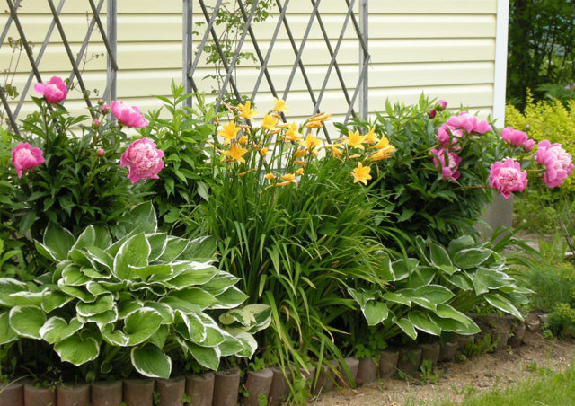 Фото клумб с многолетними цветами на даче своими руками фото