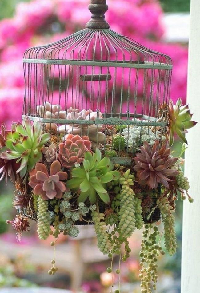 Украшения для сада своими руками. Суккулентные растения в ненужной подвесной клетке для птиц смотрятся очаровательно