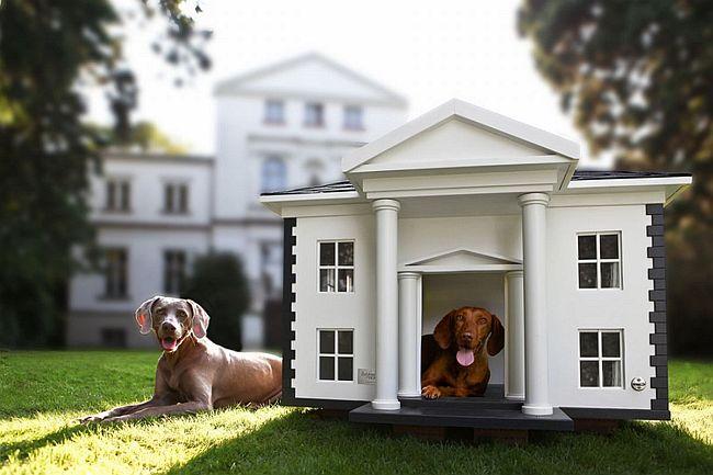 Делаем вольер для собаки своими руками (50 фото): что учесть и как построить
