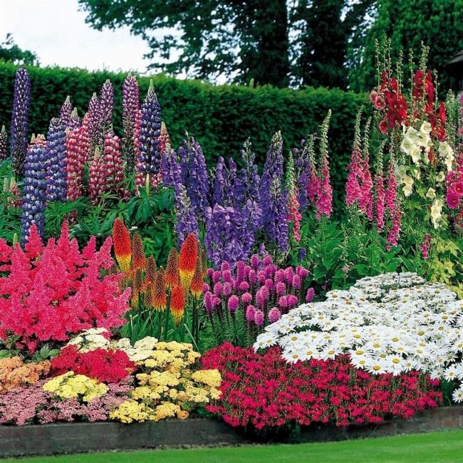 Роскошный миксбордер радует многоцветьем