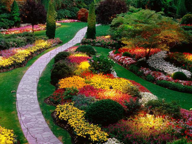 Английский миксбордер - один из самых прекрасных стилей. В таком цветнике сочетаются и садовые формы с большими цветками и мелкоцветковые виды и сорта