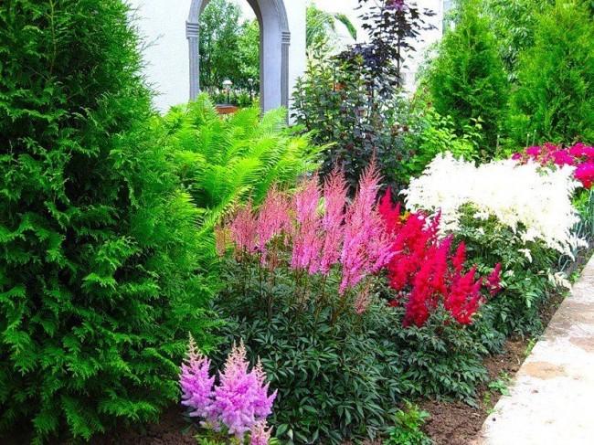 Интересным фоном для миксбордеров являются лианы, вечнозелёные или цветущие кустарники и деревья, лиственные деревья с ажурной кроной.