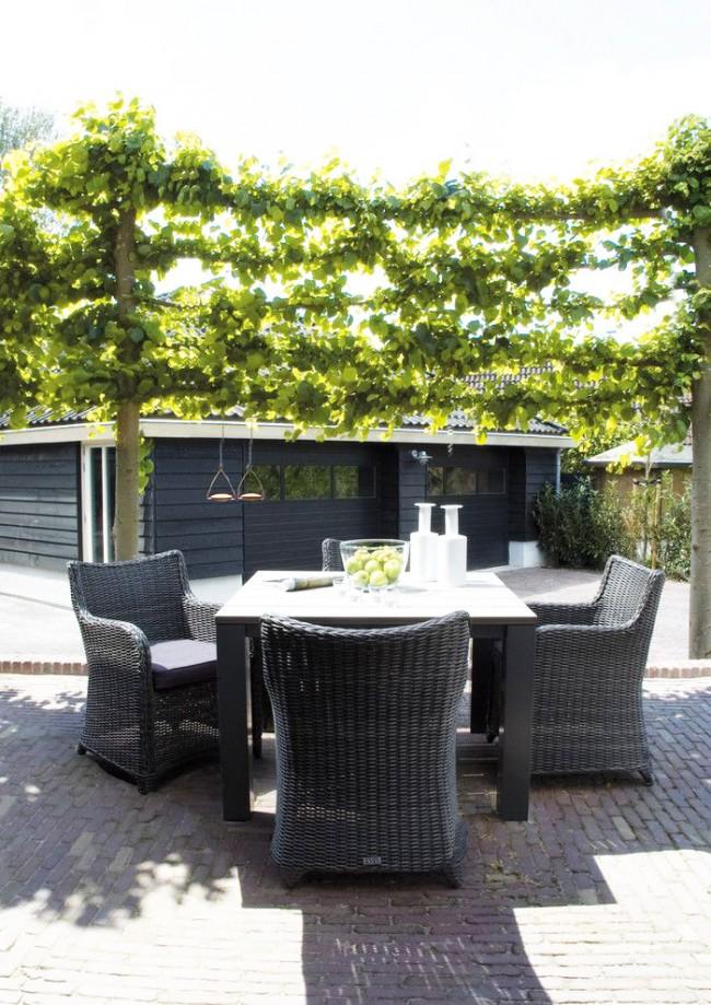 Аккуратная шпалера для винограда послужит отличным украшением вашего участка