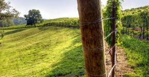 Руководство по созданию шпалеры для винограда своими руками (47 фото) фото