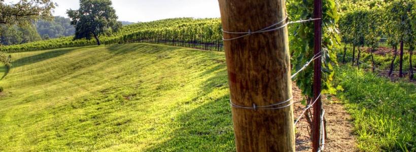 Руководство по созданию шпалеры для винограда своими руками (47 фото)