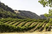 Фото 6 Руководство по созданию шпалеры для винограда своими руками (47 фото)