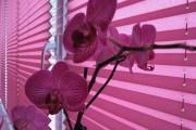 Фото 15 Шторы-плиссе на окна: 60+ идей для светлого интерьера, правила установки и ухода