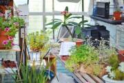 Фото 8 Теплицы из поликарбоната (47 фото): рациональное садово-дачное решение