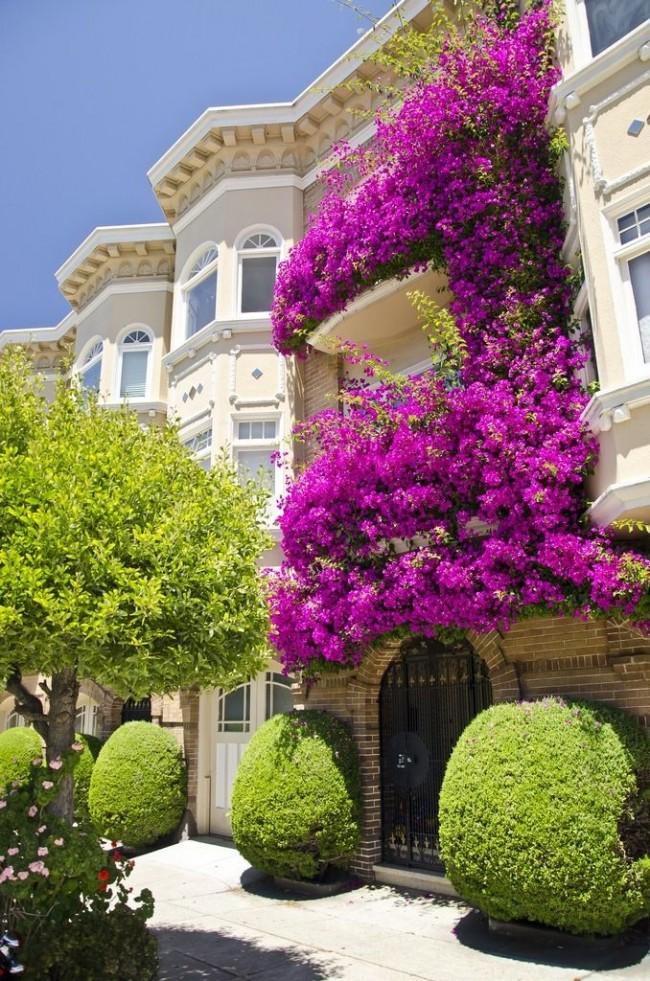 Классический пример вертикального озеленения с помощью вьющихся растений