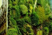 Фото 10 Вертикальное озеленение (58 фото) — интересный способ экономии пространства
