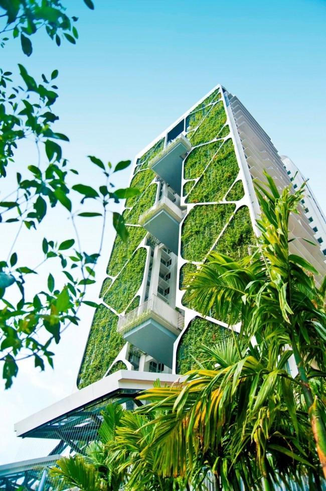 Вертикальное озеленение - прекрасный пример практичного озеленения