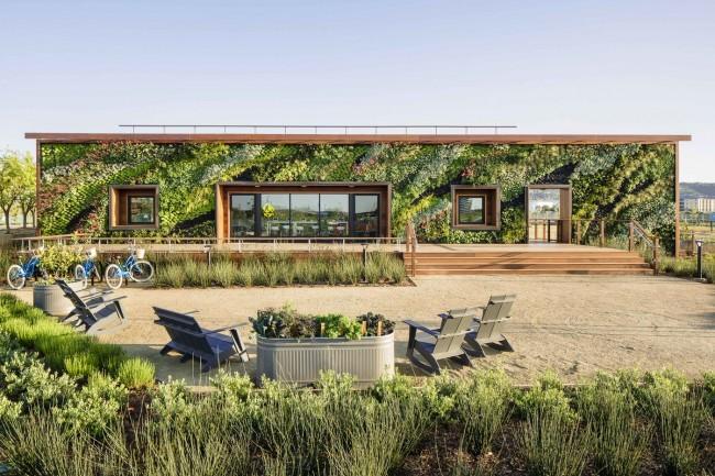 Вертикальное озеленение фасада одноэтажного дома