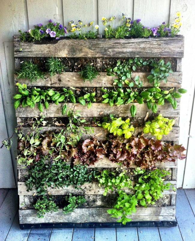 Выращивание в деревянных кадках и цветов и съедобных трав