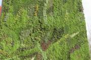 Фото 16 Вертикальное озеленение (58 фото) — интересный способ экономии пространства