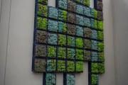 Фото 5 Вертикальное озеленение (58 фото) — интересный способ экономии пространства