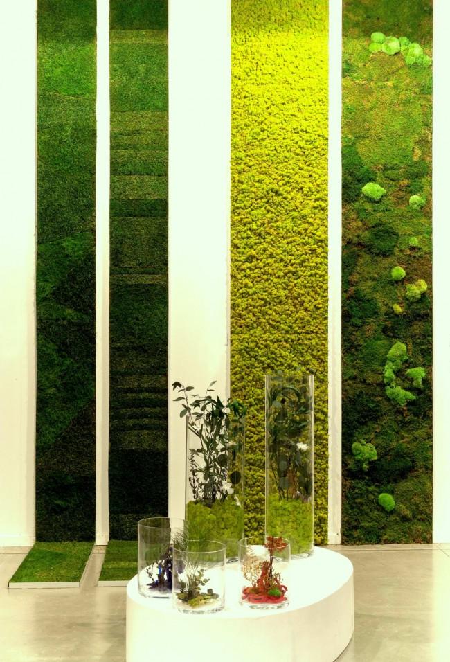 Вертикальное озеленение в квартире с использованием мха