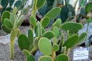 Фото 9 Виды домашних кактусов: тонкости правильного ухода и как заставить кактус цвести?