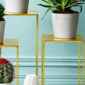Виды домашних кактусов: тонкости правильного ухода и как заставить кактус цвести? фото