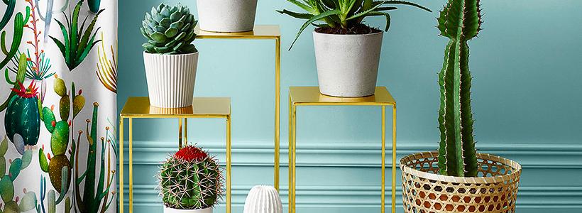 Виды домашних кактусов: тонкости правильного ухода и как заставить кактус цвести?