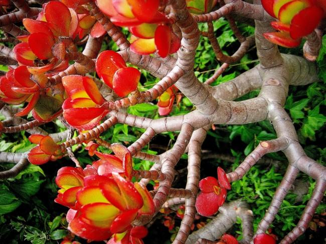Суккуленты. Очень многочисленное семейство толстянковых - крайне популярно в садоводстве. Всеми любимое денежное дерево относится именно к нему