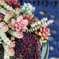 Суккуленты (50 фото): чудные растения,  привыкшие к засухе фото