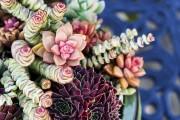 Фото 17 Суккуленты (50 фото): чудные растения,  привыкшие к засухе