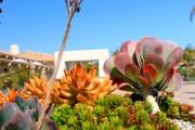 Фото 2 Суккуленты (50 фото): чудные растения,  привыкшие к засухе