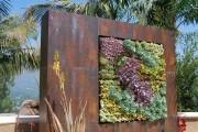 Фото 19 Суккуленты (50 фото): чудные растения,  привыкшие к засухе