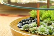 Фото 1 Суккуленты (50 фото): чудные растения,  привыкшие к засухе