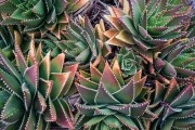 Фото 22 Суккуленты (50 фото): чудные растения,  привыкшие к засухе