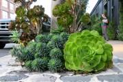 Фото 25 Суккуленты (50 фото): чудные растения,  привыкшие к засухе