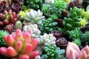 Фото 8 Суккуленты (50 фото): чудные растения,  привыкшие к засухе