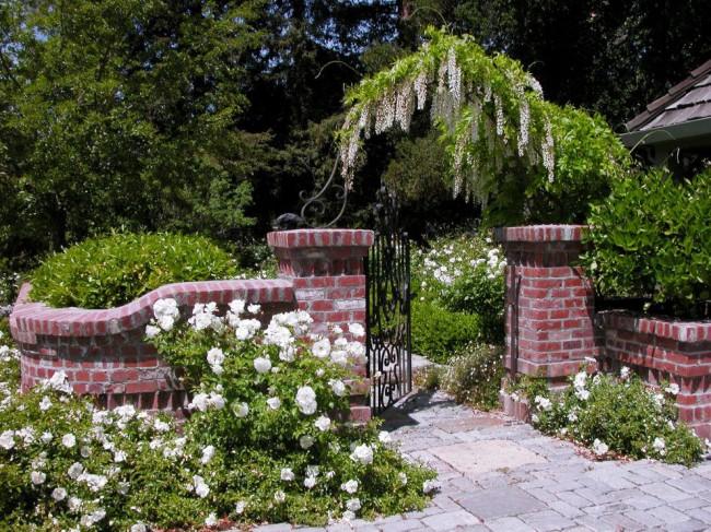 Забор из кирпича может послужить подпоркой для вьющихся растений