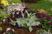 Фото 20 Примула многолетняя, посадка и уход (60 фото): как вырастить цветы небесной красоты