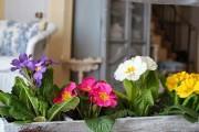 Фото 12 Примула многолетняя, посадка и уход (60 фото): как вырастить цветы небесной красоты