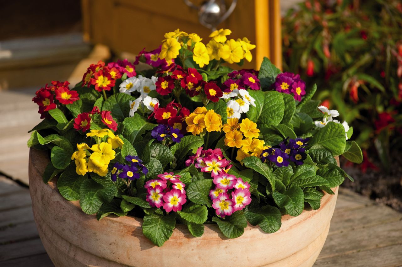 Садовые цветы фото с названиями комнатные