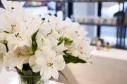 Фото 25 Альстромерия (50 фото): яркая и привлекательная лилия инков
