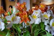 Фото 17 Альстромерия (50 фото): яркая и привлекательная лилия инков