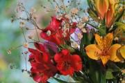 Фото 7 Альстромерия (50 фото): яркая и привлекательная лилия инков