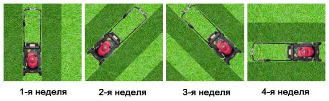 Электрическая газонокосилка. Если вы хотите идеально однородное покрытие газона травой без следов от газонокосилки - подстригайте его каждую неделю в разных направлениях